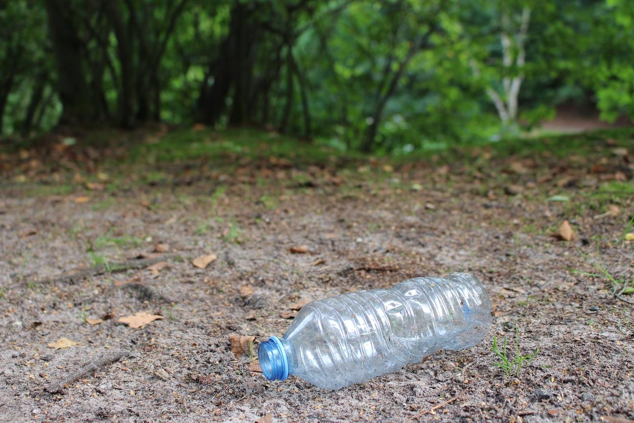 Litter in the forest